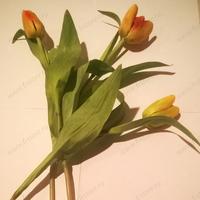 Тюльпан рыжий